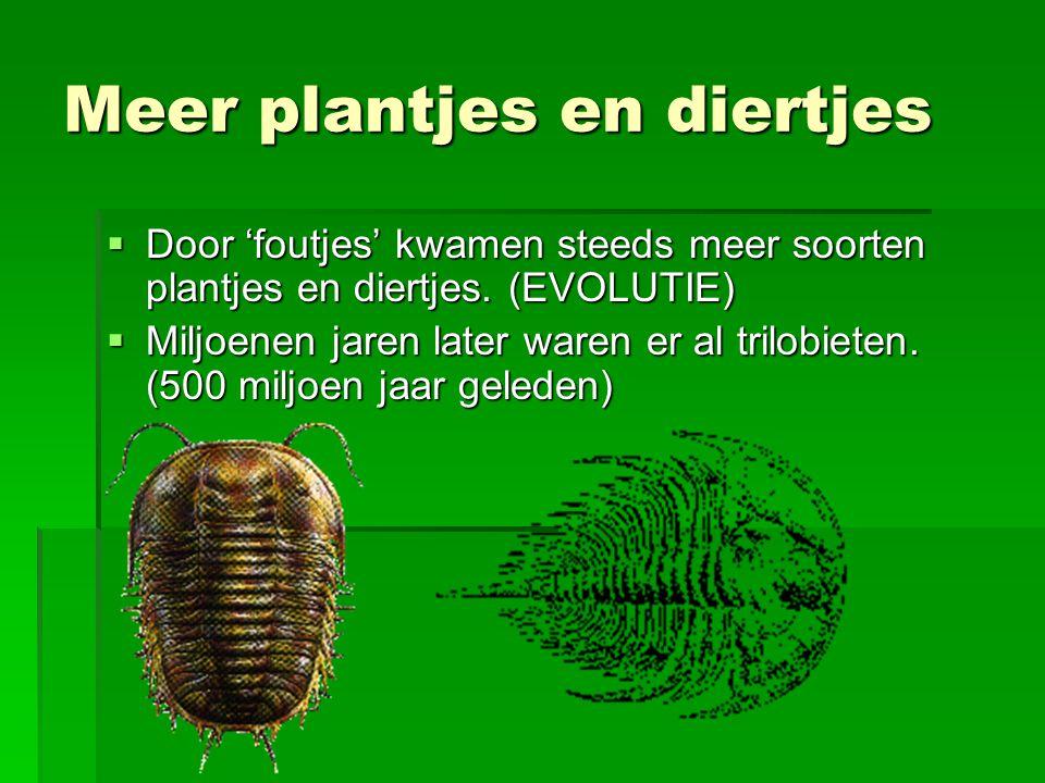 Meer plantjes en diertjes  Door 'foutjes' kwamen steeds meer soorten plantjes en diertjes.