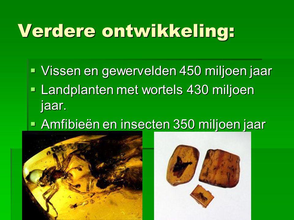 Verdere ontwikkeling:  Vissen en gewervelden 450 miljoen jaar  Landplanten met wortels 430 miljoen jaar.