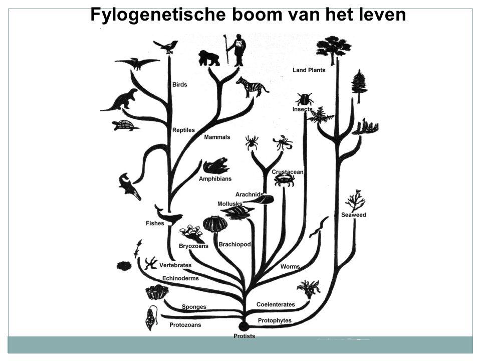 Fylogenetische boom van het leven