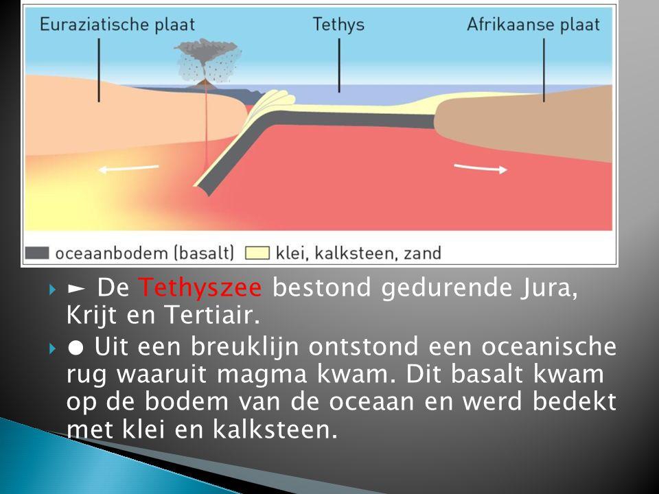  ► De Tethyszee bestond gedurende Jura, Krijt en Tertiair.  ● Uit een breuklijn ontstond een oceanische rug waaruit magma kwam. Dit basalt kwam op d