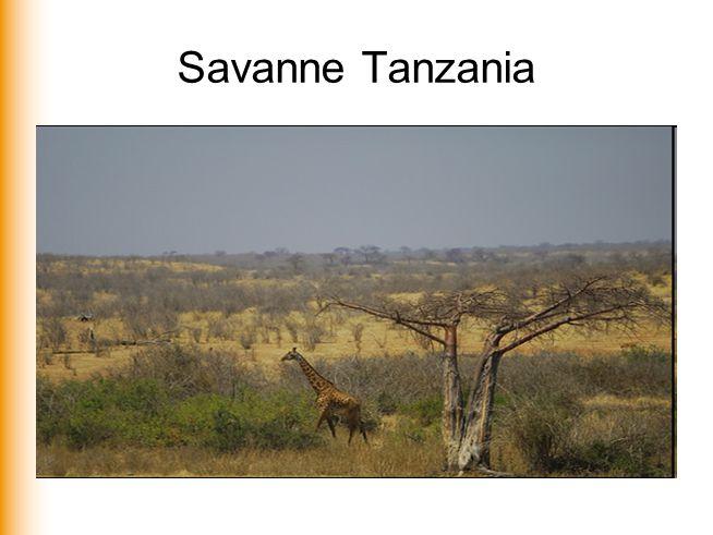 Savanne Tanzania
