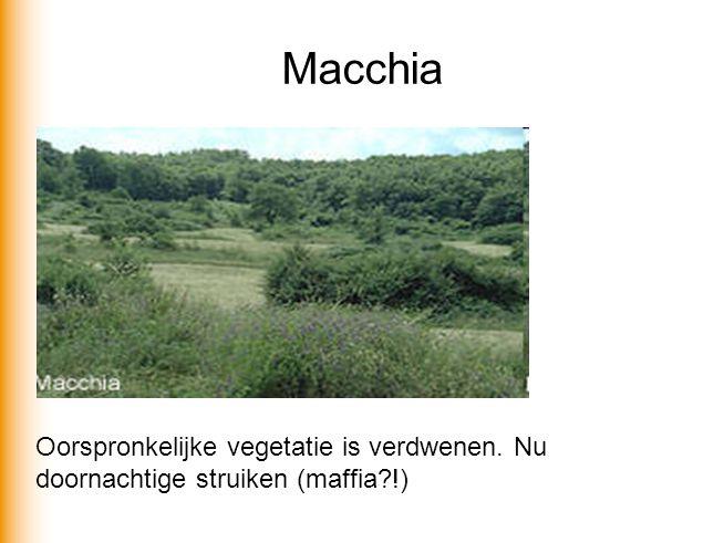 Macchia Oorspronkelijke vegetatie is verdwenen. Nu doornachtige struiken (maffia?!)
