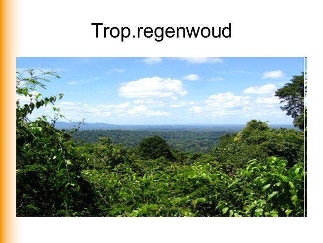 Trop.regenwoud