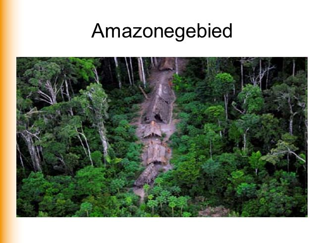Amazonegebied