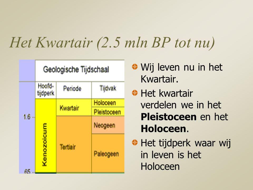 Het Kwartair (2.5 mln BP tot nu) Wij leven nu in het Kwartair.
