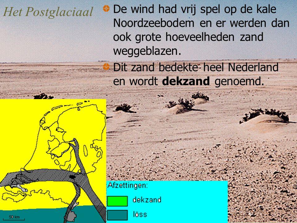 Het Postglaciaal De wind had vrij spel op de kale Noordzeebodem en er werden dan ook grote hoeveelheden zand weggeblazen.