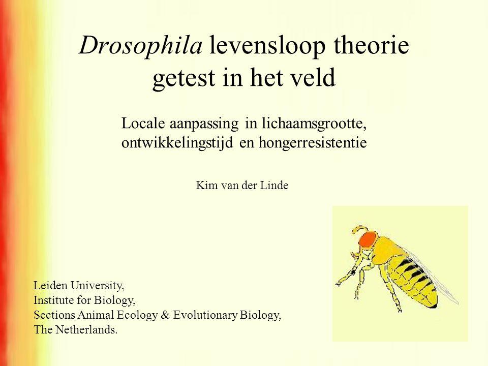 Drosophila levensloop theorie getest in het veld Leiden University, Institute for Biology, Sections Animal Ecology & Evolutionary Biology, The Netherl
