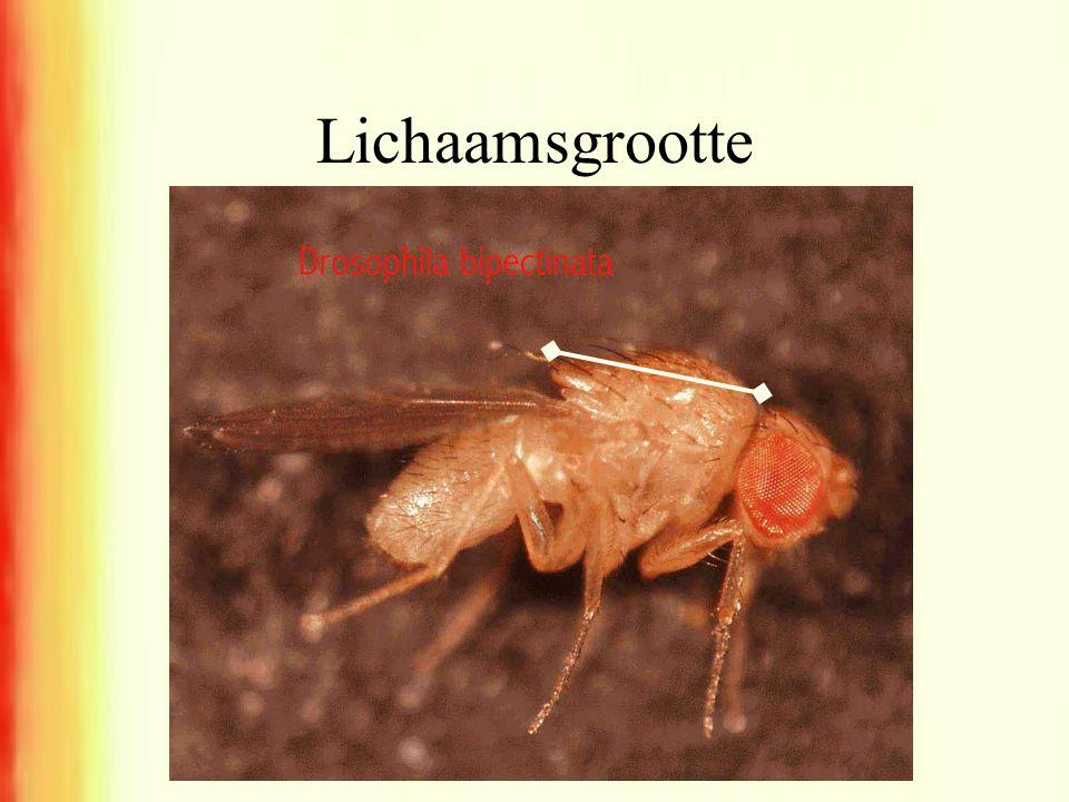 Lichaamsgrootte