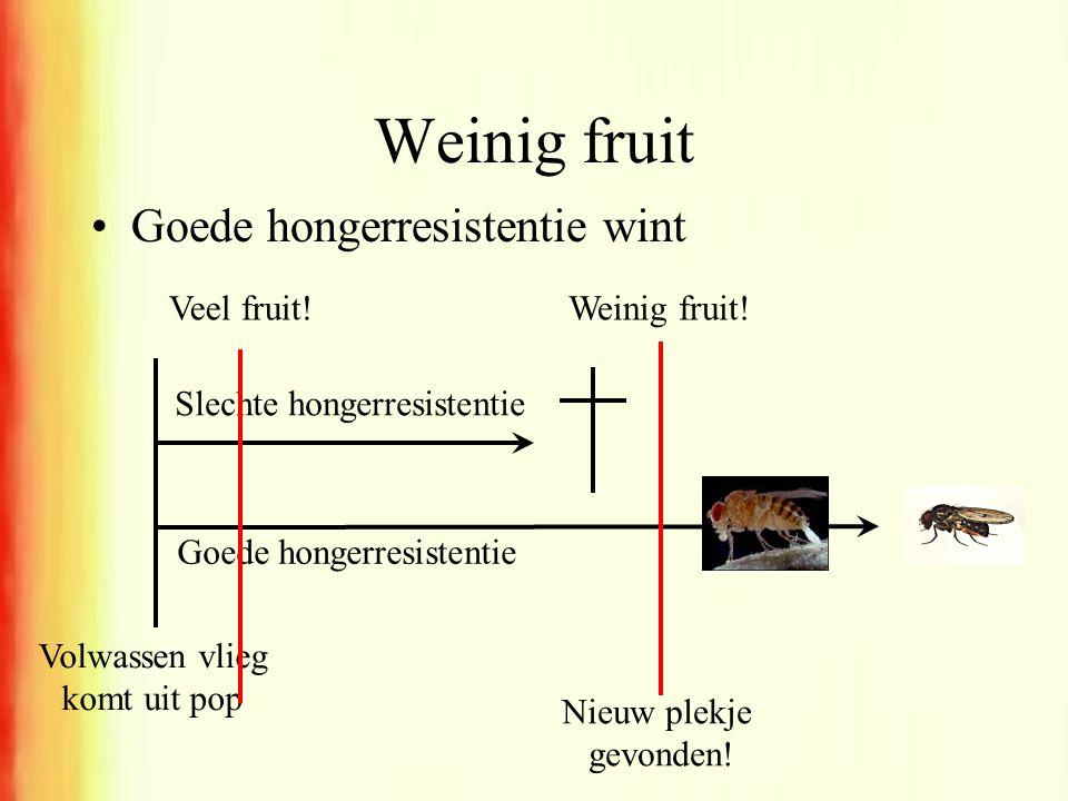 Weinig fruit •Goede hongerresistentie wint Slechte hongerresistentie Volwassen vlieg komt uit pop Goede hongerresistentie Nieuw plekje gevonden! Veel