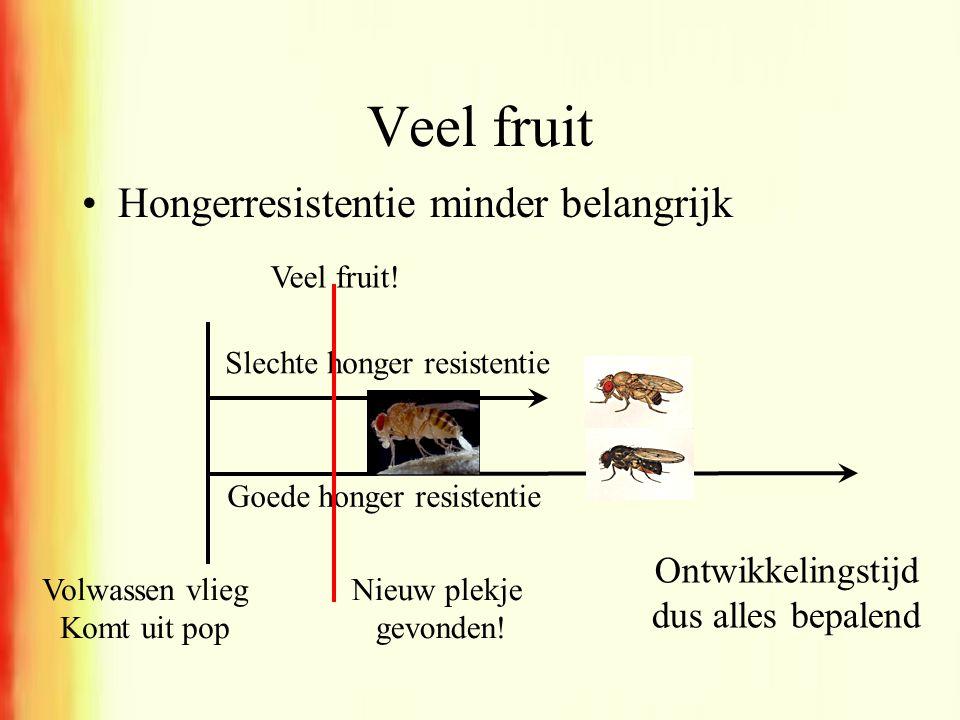 Veel fruit •Hongerresistentie minder belangrijk Slechte honger resistentie Volwassen vlieg Komt uit pop Goede honger resistentie Nieuw plekje gevonden