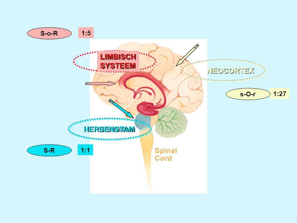 HET BREIN •Slechte verbindingen tussen de drie hersensystemen: oude, midden en nieuwe hersenen: verkeerd zoekparadigma.