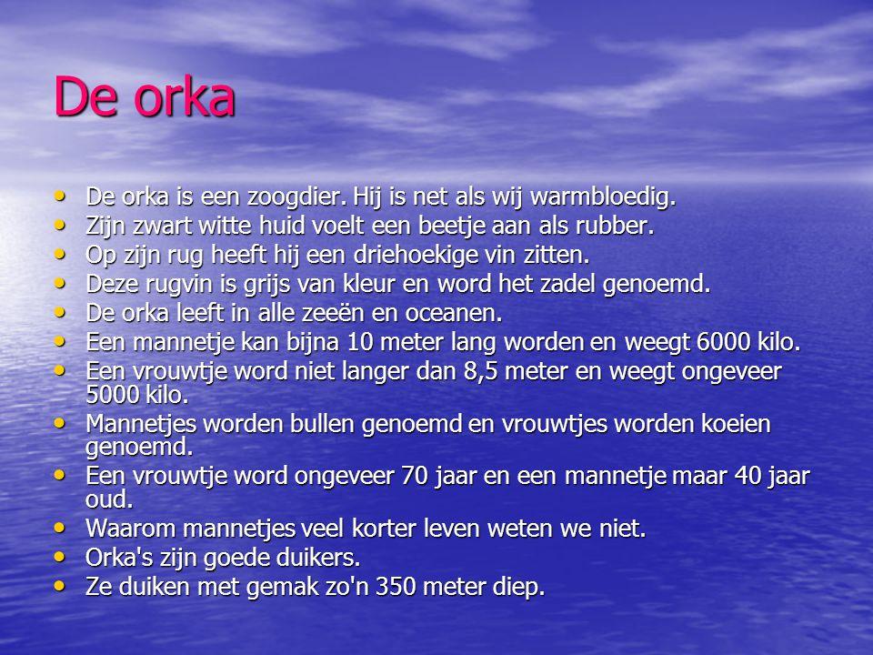 Hoe ademt de orka • De orka heeft longen,hij moet dus steeds boven water komen om adem te halen.