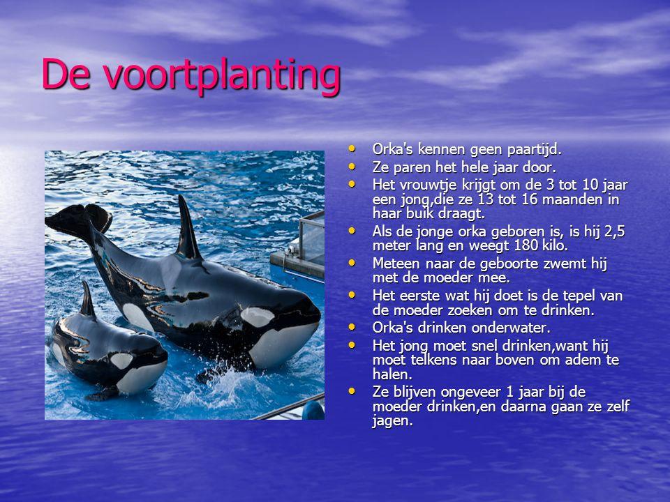Orka's en mensen • Ongeveer 30 jaar geleden,dachten we dat de orka een gevaarlijk roofdier was.