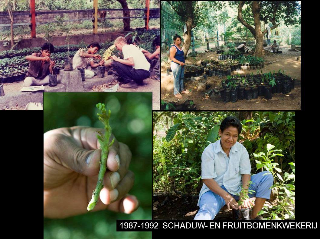 1987-1992SCHADUW- EN FRUITBOMENKWEKERIJ