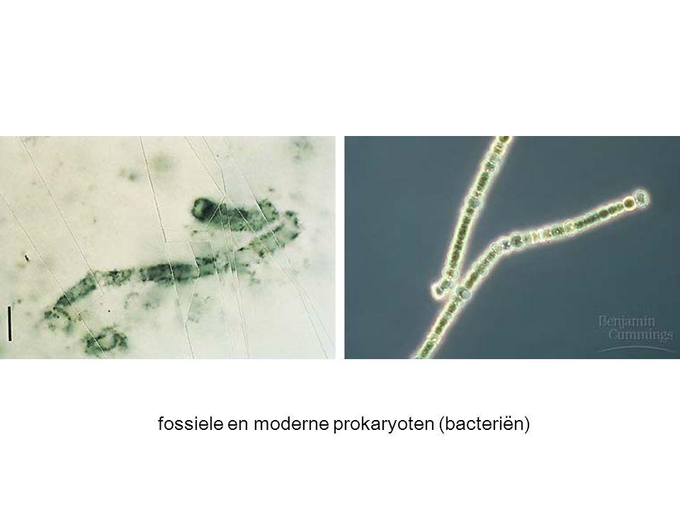 fossiele en moderne prokaryoten (bacteriën)