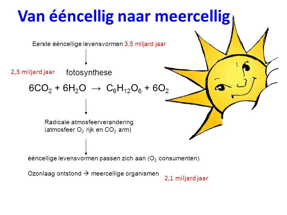 Van ééncellig naar meercellig Eerste ééncellige levensvormen 3,5 miljard jaar 6CO 2 + 6H 2 O → C 6 H 12 O 6 + 6O 2 fotosynthese Radicale atmosfeerverandering (atmosfeer O 2 rijk en CO 2 arm) ééncellige levensvormen passen zich aan (O 2 consumenten) Ozonlaag ontstond  meercellige organismen 2,3 miljard jaar 2,1 miljard jaar