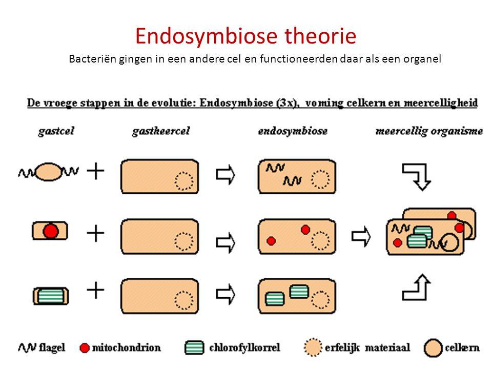 Endosymbiose theorie Bacteriën gingen in een andere cel en functioneerden daar als een organel