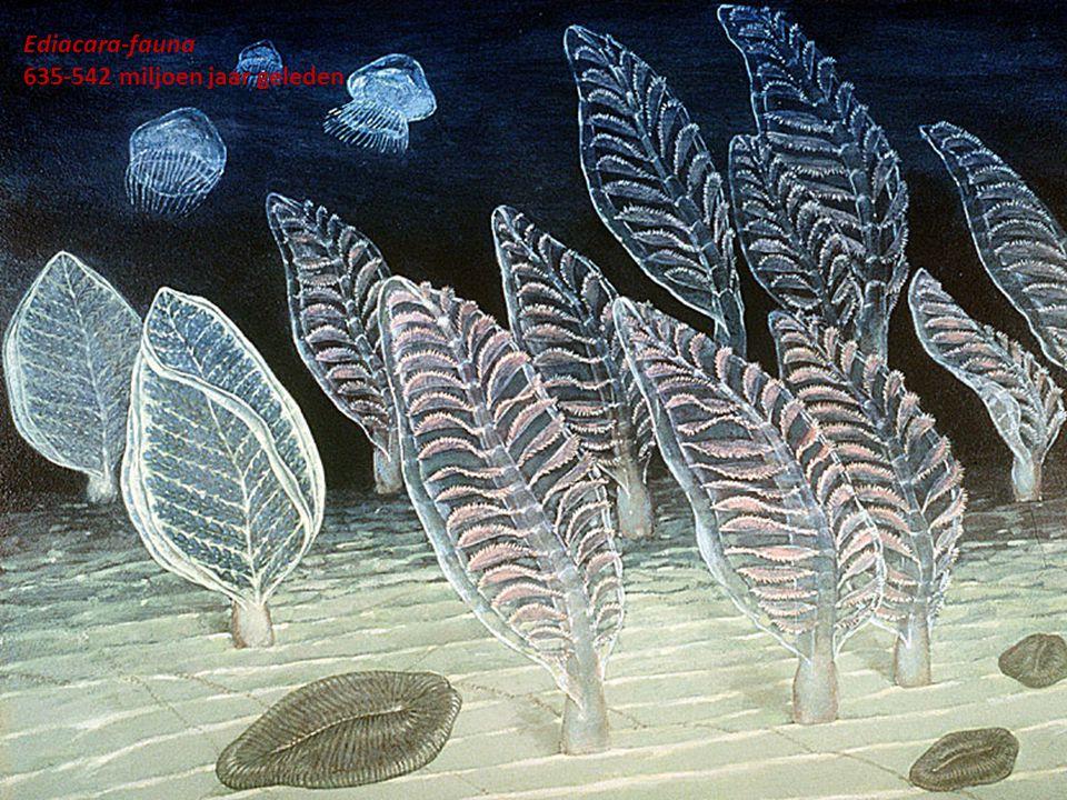 Ediacara-fauna 635-542 miljoen jaar geleden