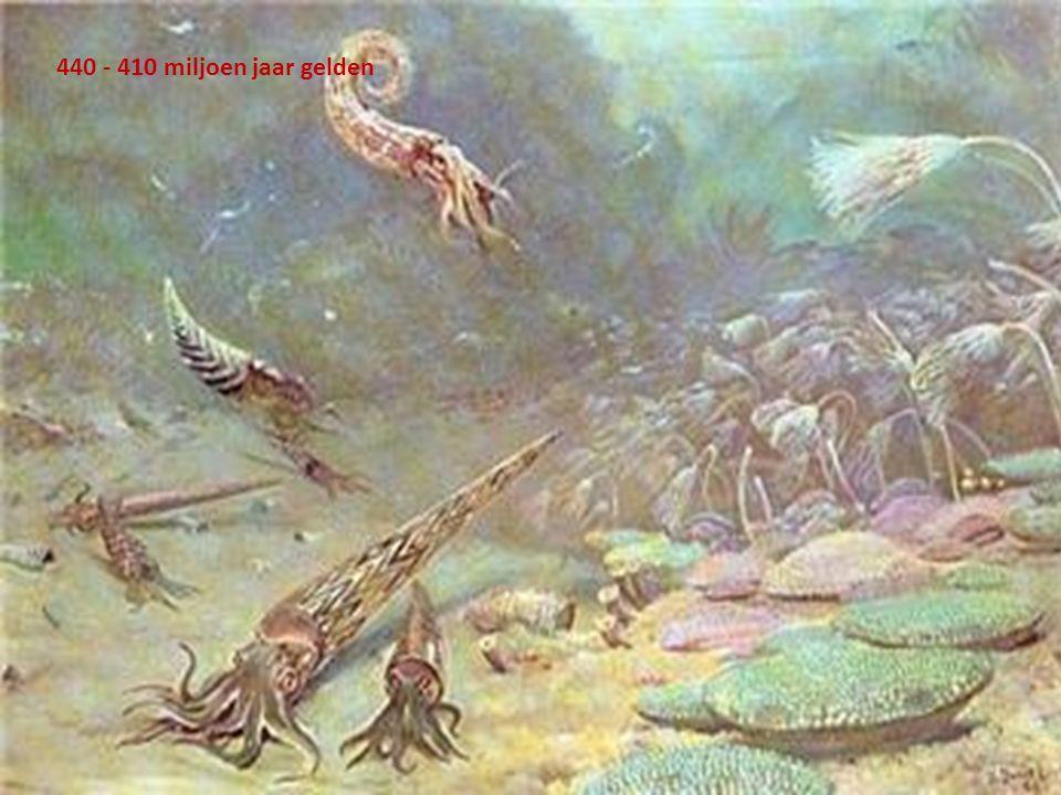 440 - 410 miljoen jaar gelden
