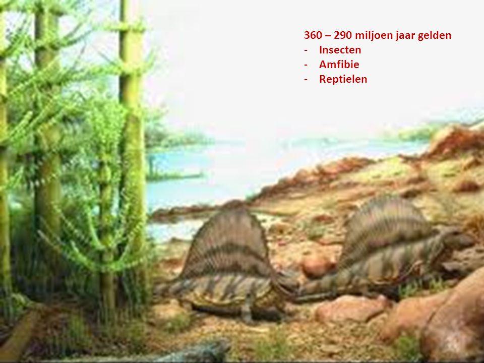 360 – 290 miljoen jaar gelden -Insecten -Amfibie -Reptielen
