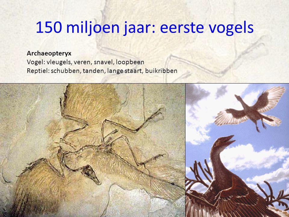 150 miljoen jaar: eerste vogels Archaeopteryx Vogel: vleugels, veren, snavel, loopbeen Reptiel: schubben, tanden, lange staart, buikribben
