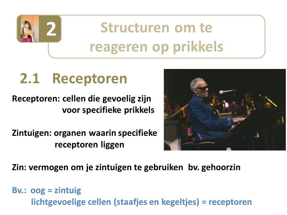 Structuren om te reageren op prikkels 2 2.1 Receptoren Receptoren: cellen die gevoelig zijn voor specifieke prikkels Zintuigen: organen waarin specifieke receptoren liggen Zin: vermogen om je zintuigen te gebruiken bv.