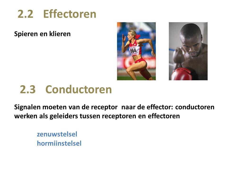 2.3 Conductoren Spieren en klieren 2.2 Effectoren Signalen moeten van de receptor naar de effector: conductoren werken als geleiders tussen receptoren