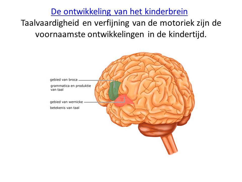 De ontwikkeling van het kinderbreinDe ontwikkeling van het kinderbrein Taalvaardigheid en verfijning van de motoriek zijn de voornaamste ontwikkelinge
