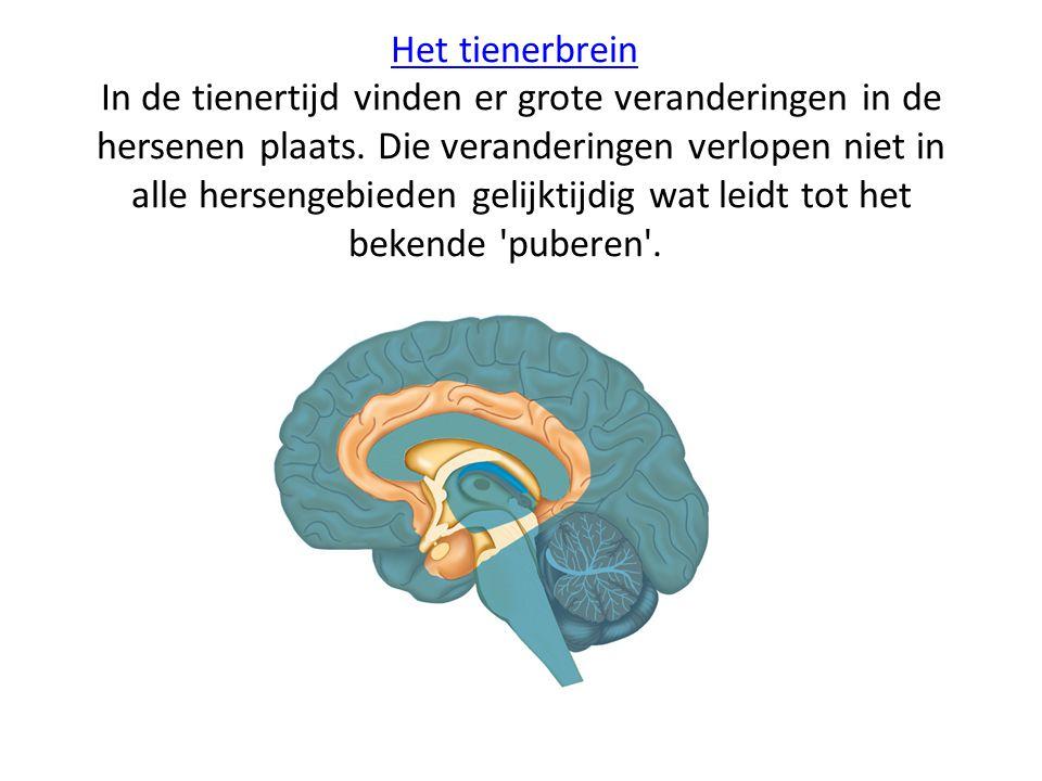 Het tienerbreinHet tienerbrein In de tienertijd vinden er grote veranderingen in de hersenen plaats. Die veranderingen verlopen niet in alle hersengeb