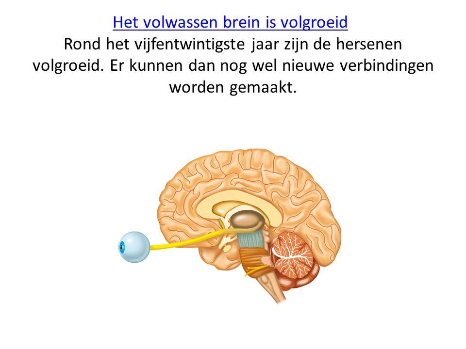 Het volwassen brein is volgroeidHet volwassen brein is volgroeid Rond het vijfentwintigste jaar zijn de hersenen volgroeid. Er kunnen dan nog wel nieu