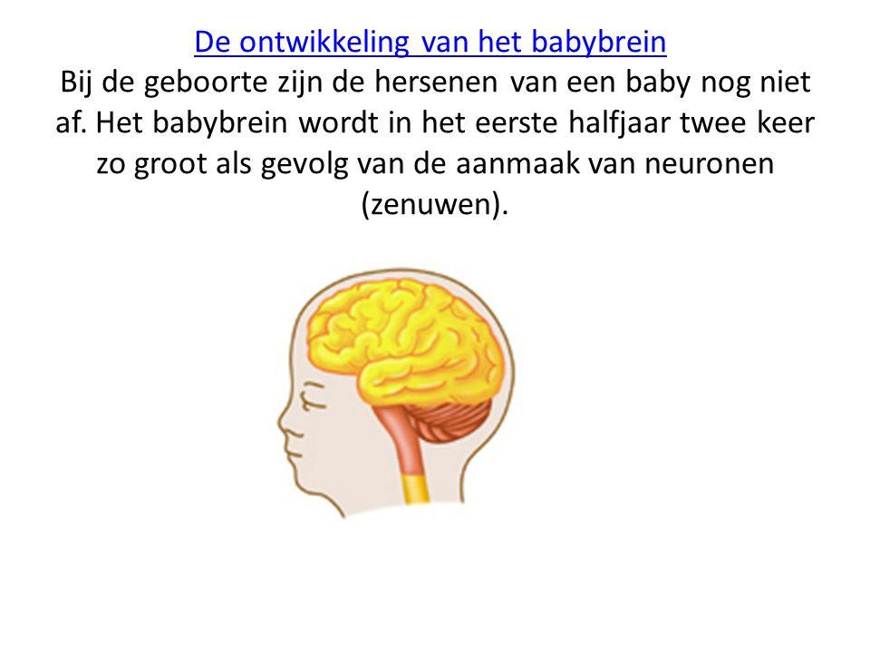 De ontwikkeling van het babybreinDe ontwikkeling van het babybrein Bij de geboorte zijn de hersenen van een baby nog niet af. Het babybrein wordt in h