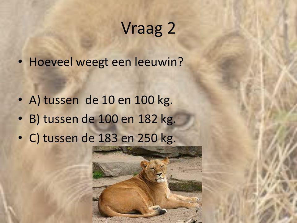 Vraag 2 • Hoeveel weegt een leeuwin? • A) tussen de 10 en 100 kg. • B) tussen de 100 en 182 kg. • C) tussen de 183 en 250 kg.