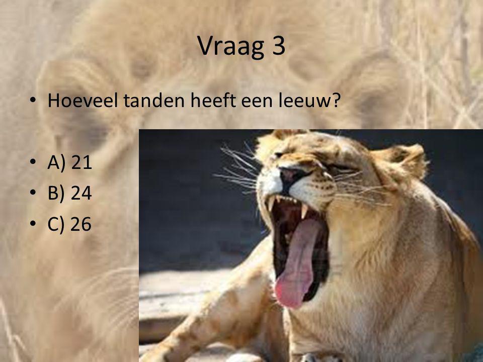Vraag 3 • Hoeveel tanden heeft een leeuw? • A) 21 • B) 24 • C) 26