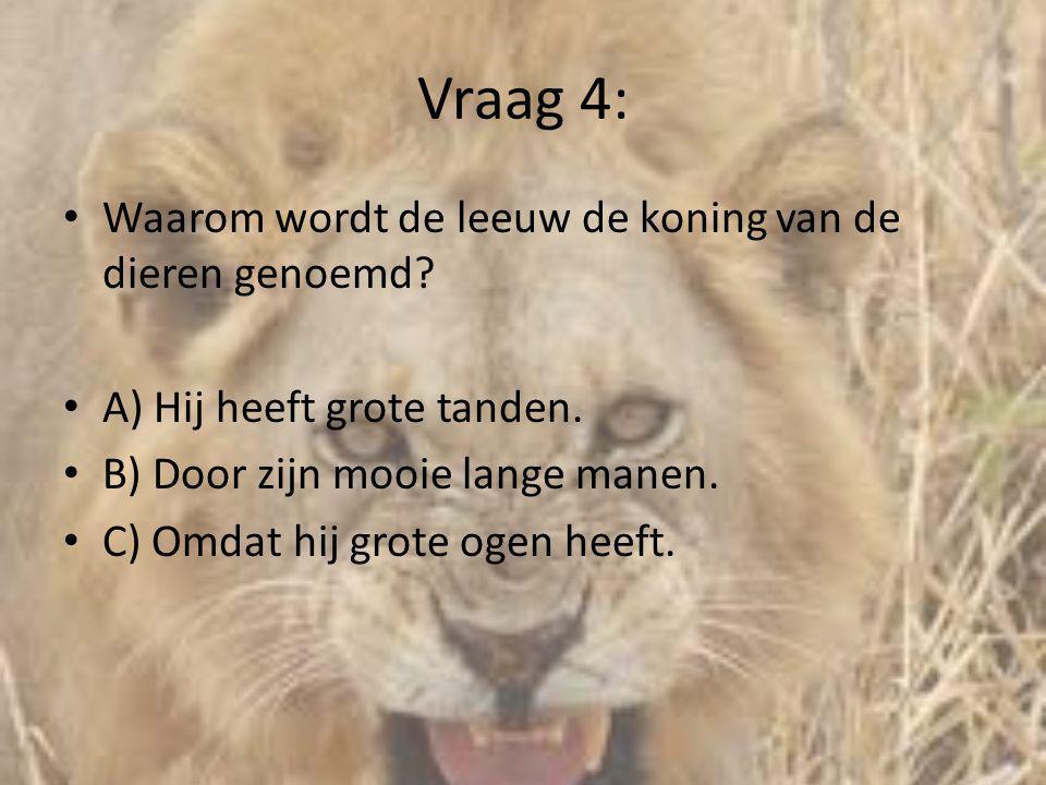 Vraag 4: • Waarom wordt de leeuw de koning van de dieren genoemd? • A) Hij heeft grote tanden. • B) Door zijn mooie lange manen. • C) Omdat hij grote
