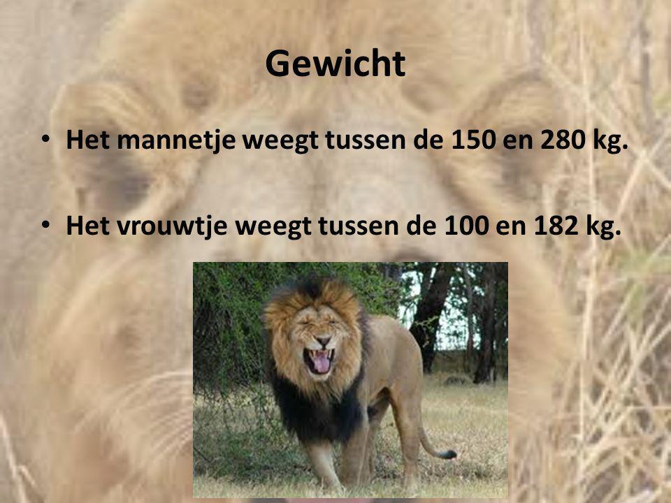Gewicht • Het mannetje weegt tussen de 150 en 280 kg. • Het vrouwtje weegt tussen de 100 en 182 kg.