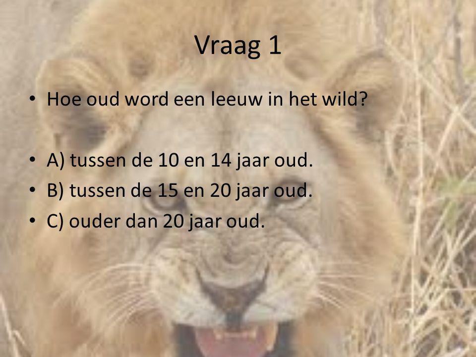 Vraag 1 • Hoe oud word een leeuw in het wild? • A) tussen de 10 en 14 jaar oud. • B) tussen de 15 en 20 jaar oud. • C) ouder dan 20 jaar oud.