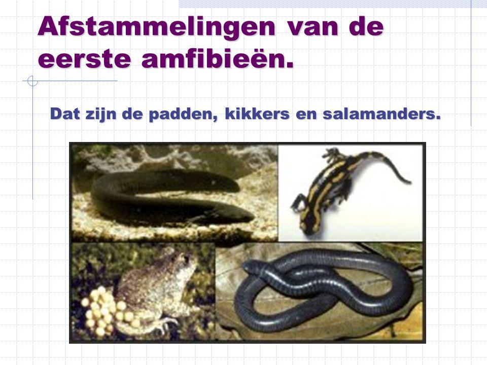 Afstammelingen van de eerste amfibieën. Dat zijn de padden, kikkers en salamanders.