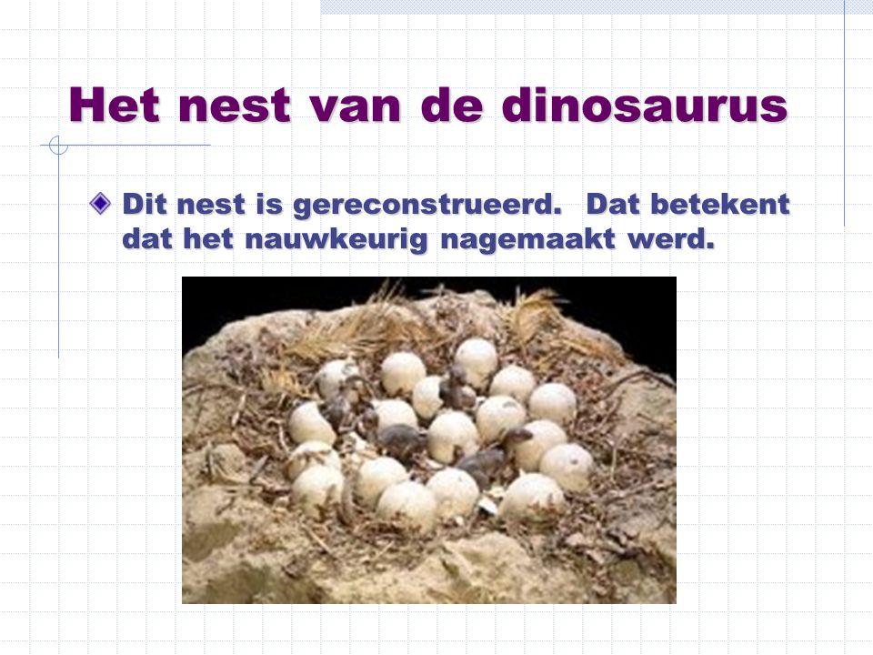 Het nest van de dinosaurus Dit nest is gereconstrueerd. Dat betekent dat het nauwkeurig nagemaakt werd.