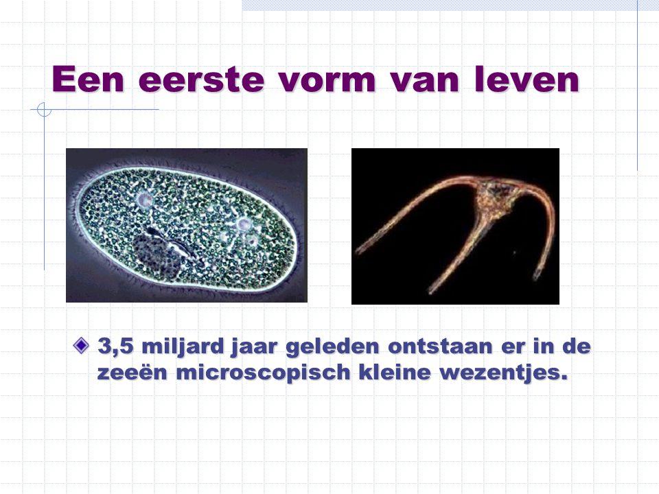 Een eerste vorm van leven 3,5 miljard jaar geleden ontstaan er in de zeeën microscopisch kleine wezentjes.