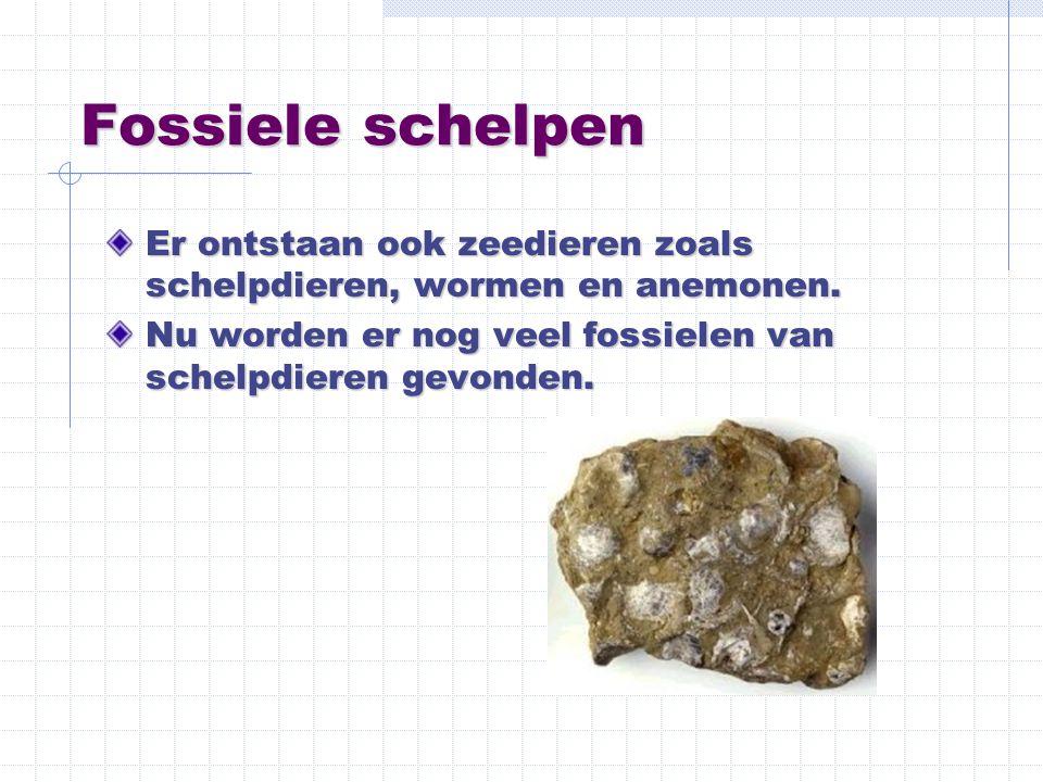 Fossiele schelpen Er ontstaan ook zeedieren zoals schelpdieren, wormen en anemonen. Nu worden er nog veel fossielen van schelpdieren gevonden.