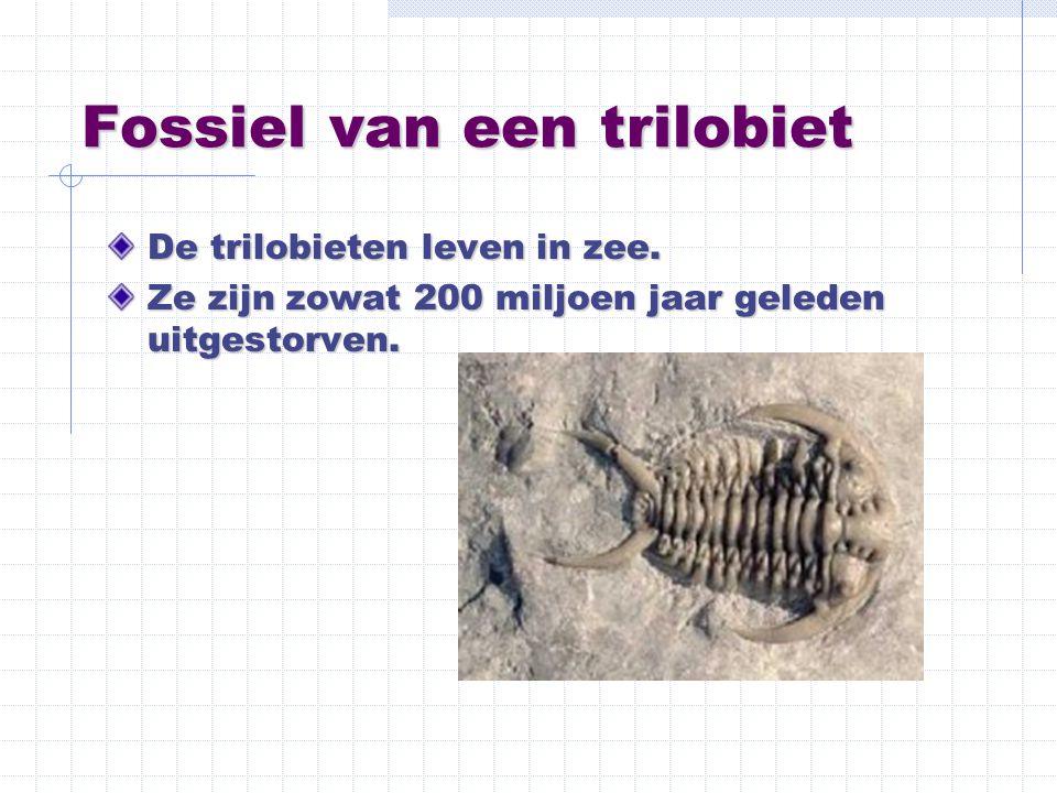 Fossiel van een trilobiet De trilobieten leven in zee. Ze zijn zowat 200 miljoen jaar geleden uitgestorven.