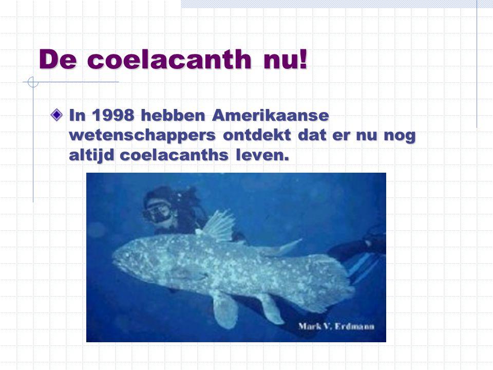 De coelacanth nu! In 1998 hebben Amerikaanse wetenschappers ontdekt dat er nu nog altijd coelacanths leven.