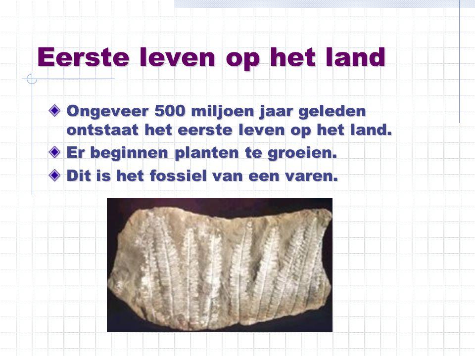 Eerste leven op het land Ongeveer 500 miljoen jaar geleden ontstaat het eerste leven op het land. Er beginnen planten te groeien. Dit is het fossiel v