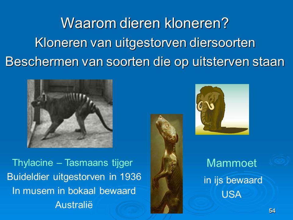 54 Thylacine – Tasmaans tijger Buideldier uitgestorven in 1936 In musem in bokaal bewaard Australië Mammoet in ijs bewaard USA Waarom dieren kloneren.