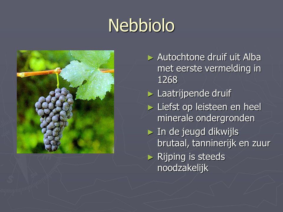 Nebbiolo ► Autochtone druif uit Alba met eerste vermelding in 1268 ► Laatrijpende druif ► Liefst op leisteen en heel minerale ondergronden ► In de jeu