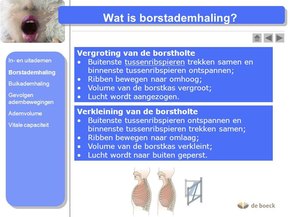 Volumeverandering borstholte bij inademen (2) en uitademen (1)