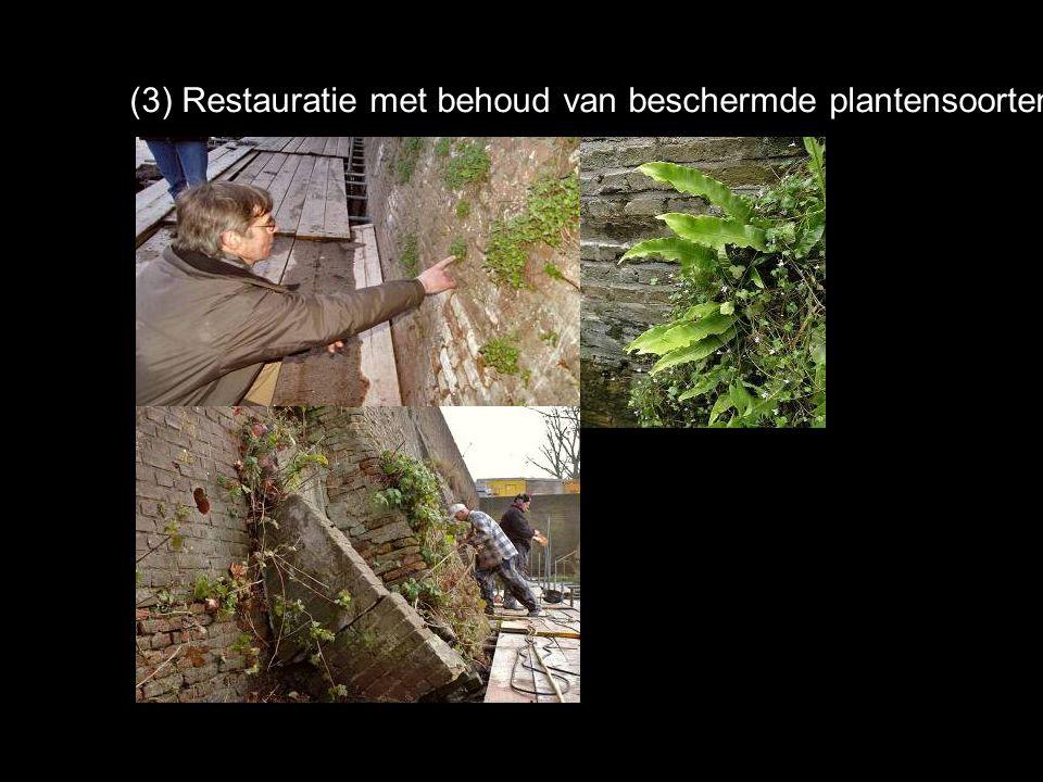 (3) Restauratie met behoud van beschermde plantensoorten