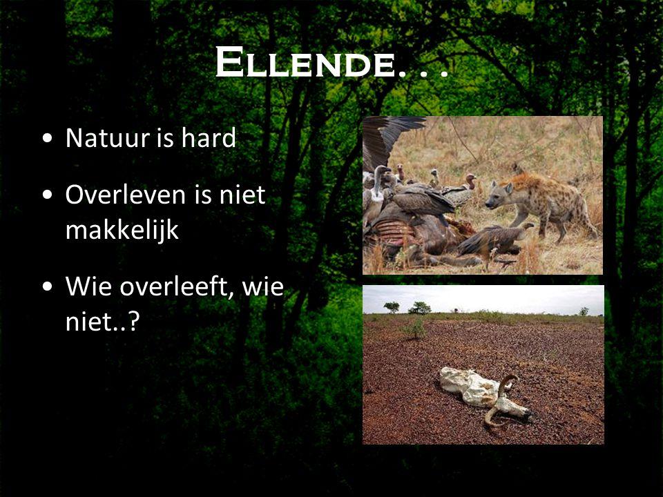 Ellende… •Natuur is hard •Overleven is niet makkelijk •Wie overleeft, wie niet..?