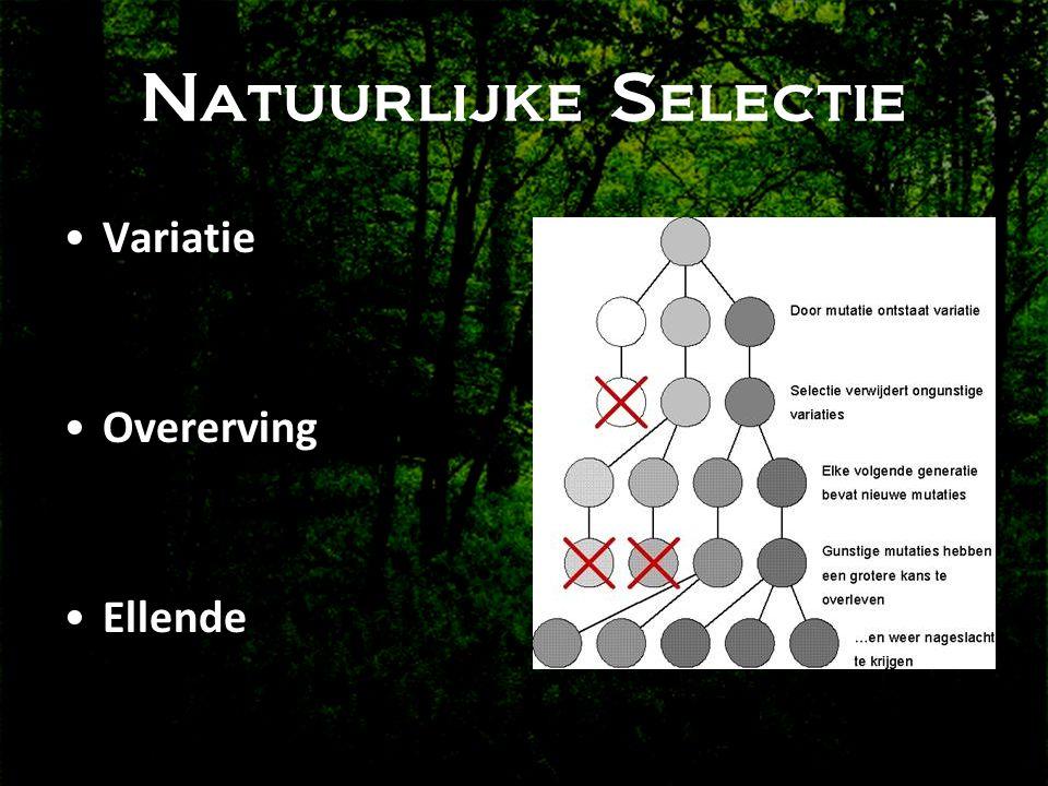 Natuurlijke Selectie •Variatie •Overerving •Ellende