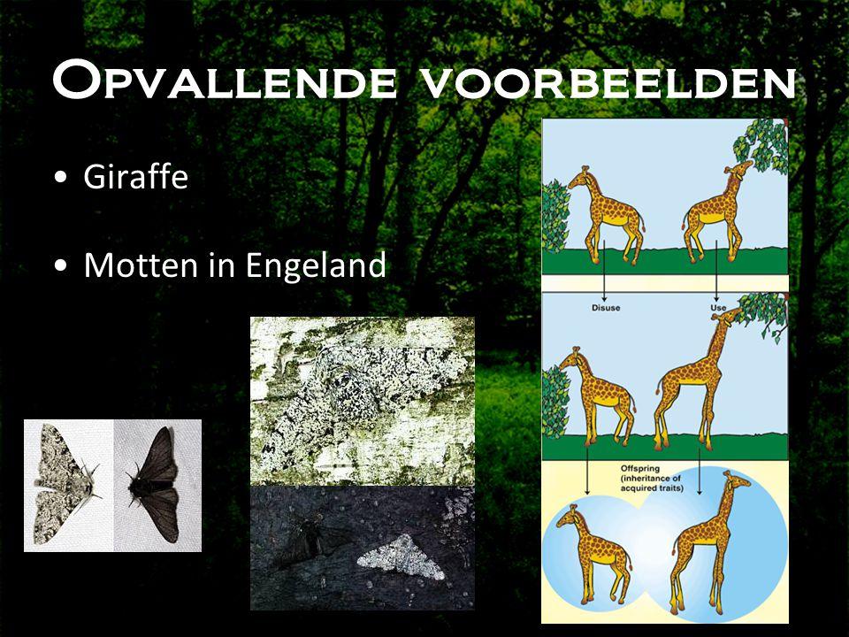 Opvallende voorbeelden •Giraffe •Motten in Engeland
